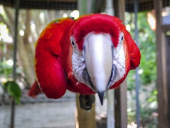 Macaw wants to eat my camera