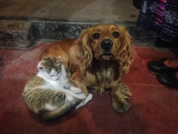 Little dog and his little kitty friend